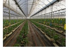 Foto ISAM, International School of Agri Management Málaga Ecuador